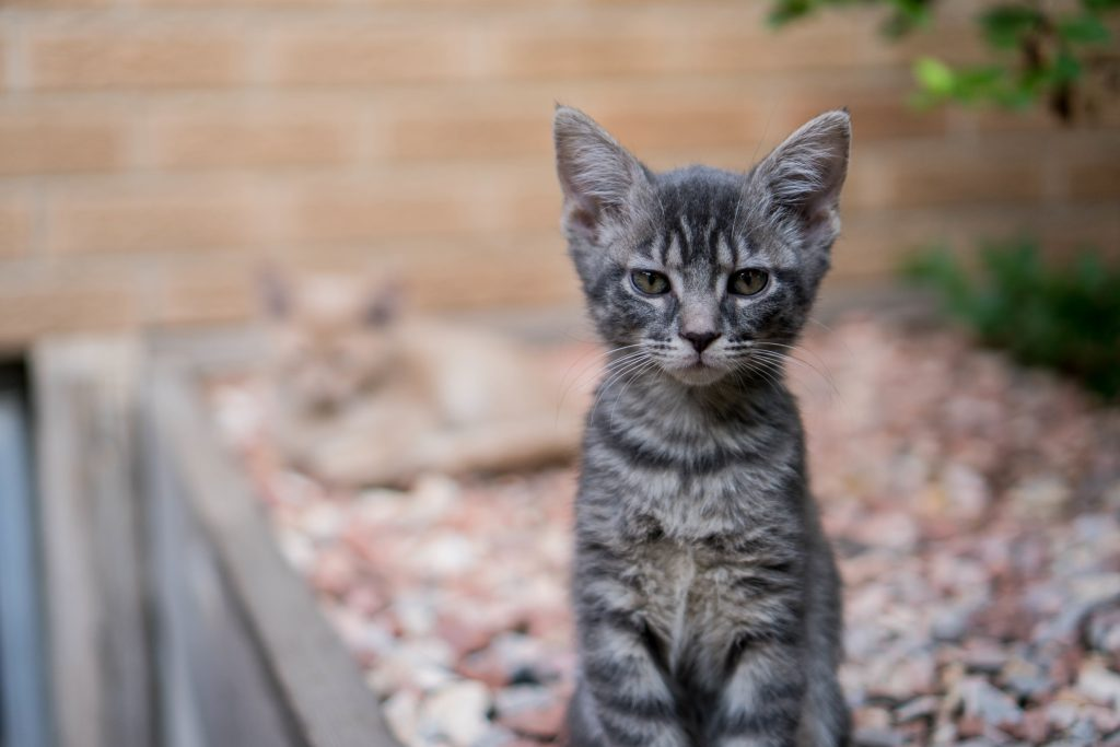 10 Questions About Kittens Pet Protect