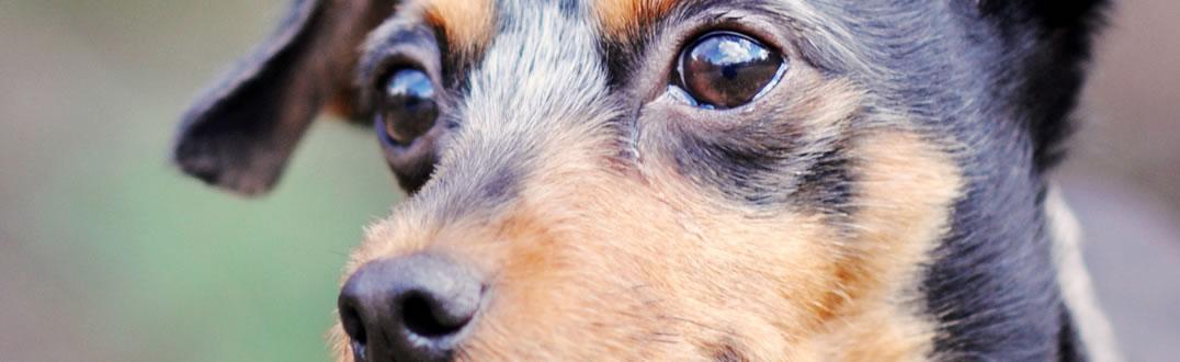 Pet Protect Header Image