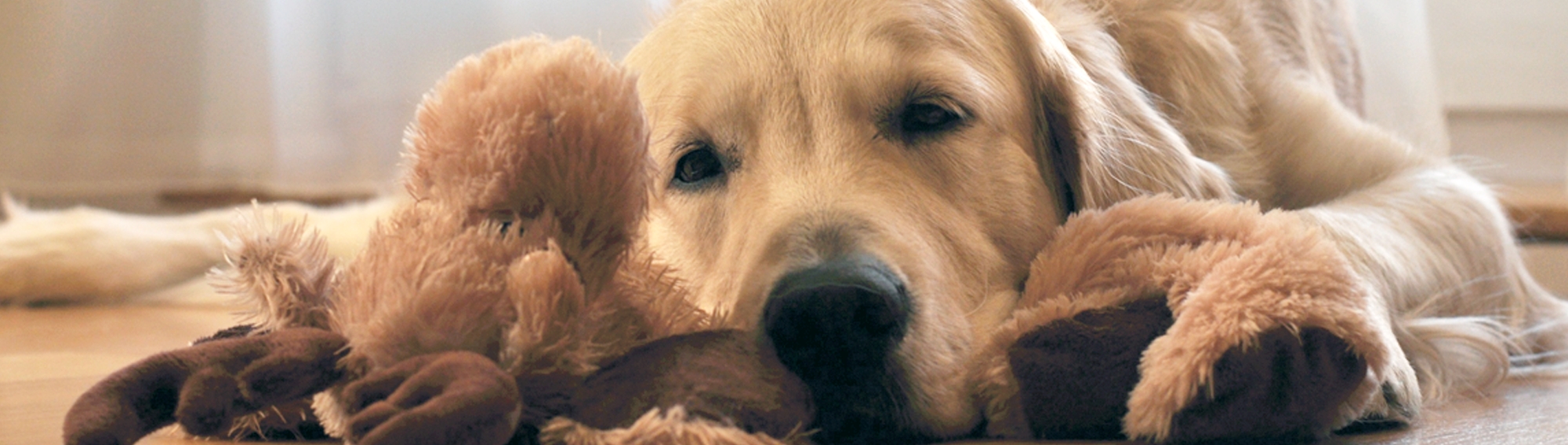 Pet Protect Header Image